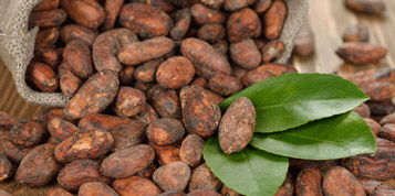 The history of cocoa
